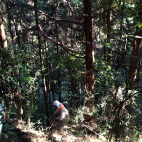 森林経営計画作成!