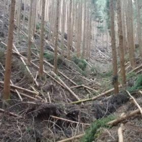 視察・見学オーダーサイト 「山林舎」 スタート