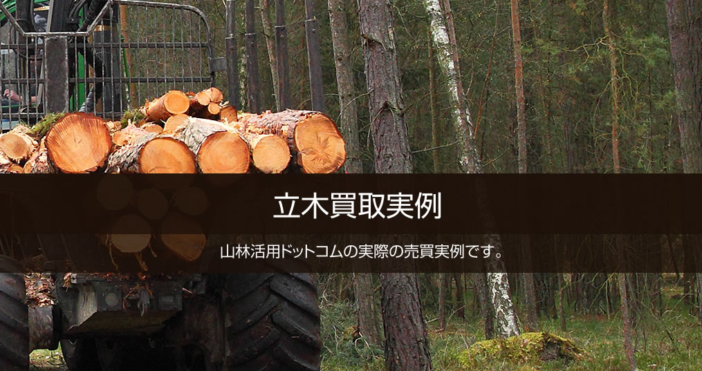 立木買取実例