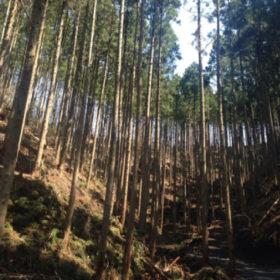 所有する山林について