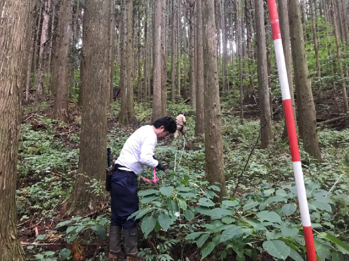 山林買取の調査を行いました。